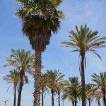 Beleef het strand van Valencia